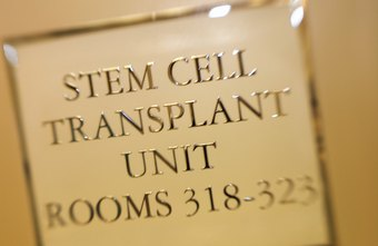 Most stem cell researchers are developmental biologists or M.D.s.