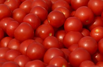 Close up of tomatoes, a nightshade vegetable.