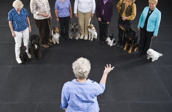 Dog trainers earn an average of $20 an hour.