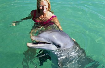 Some dolphin or whale trainers help people swim with the creatures.