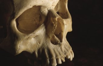 Forensic scientists can glean crime details from a partial skull.