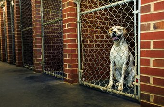 Animal Shelter Work Is Tough Physically And Emotionally