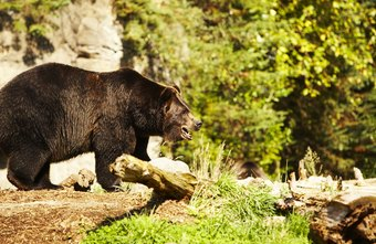 Specialists deal with numerous animals, from bears to beavers.