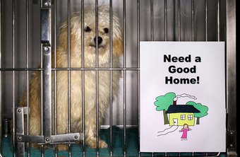 Animal shelters seek compassionate caretakers.