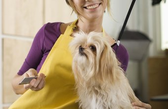 Knowledge of specific pet breeds is helpful for groomers.