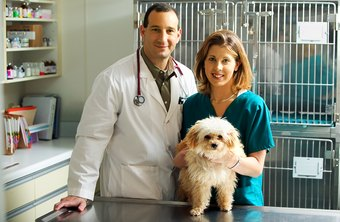 Vet techs work closely with licensed veterinarians.