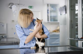 It can take as long as nine years to become fully prepared for veterinary work.