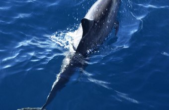 Marine mammals are extremely intelligent and able to perform highly complex tasks.