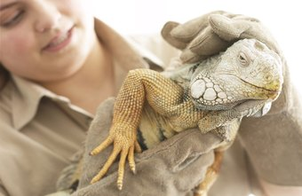 Introduce students to exotic animals by working for a zoo education program.