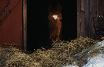 Hay is for horses, but that's only part of the equine diet.