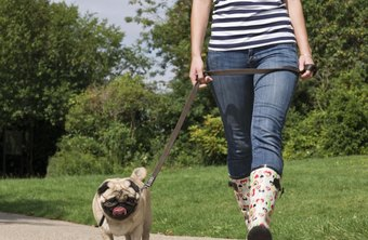 How to Get Started As a Pet Sitter | Chron com