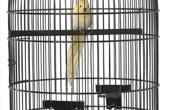 The conditions under which you keep your birds may require inspection to obtain a license.