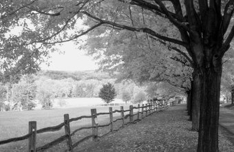 Corel PaintShop Pro can convert images like this autumn scene from color to greyscale.