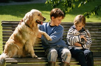 Pets are often treated like family members.