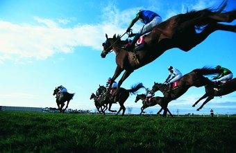 Equine Professional Salaries | Chron com