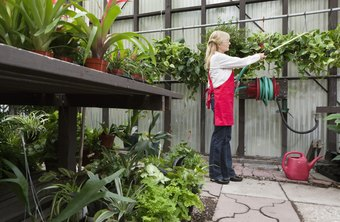Your local greenhouse can help launch your career working with plants.