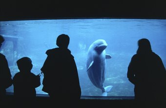 An MBA can equip animal biologists to manage an aquarium.
