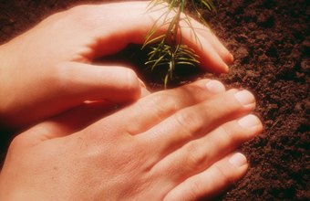 State forests need workers to plant seedlings.