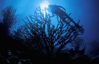 Marine biologists may dive deep as part of their jobs.