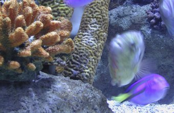Aquarium service technicians earn more in West and East Coast states.