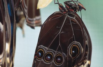 Transformative organizations can be seen as butterflies emerging from cocoons.