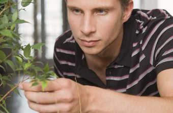 Some horticultural careers focus on houseplants.