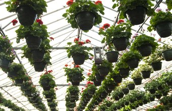 A greenhouse can be a profitable side business or a full-time money maker.
