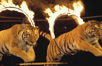 Animal labor laws protect performers in circus acts, movies and television shows.