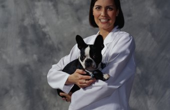 Animal physical therapists are rehabilitation specialists.