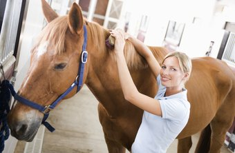 Equine massage therapy helps a horse perform at its best.