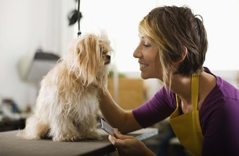 A busy groomer can groom eight to 10 dogs per day.