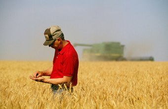Farmers require effective harvesting strategies to help maximize profits.