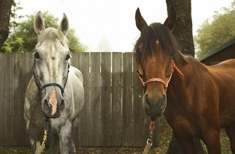 Equine businesses need to care for horses and be sensitive to their owners' concerns.