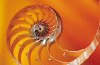 The Fibonacci spiral can be seen on nautilus shells, sunflowers and all throughout nature.