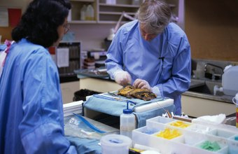 Forensic autopsy assistants weigh and measure body parts.