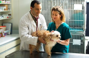 Certified veterinary technicians also receive on-the-job training.