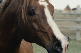 Equine veterinarians earn less than those in other specializations.