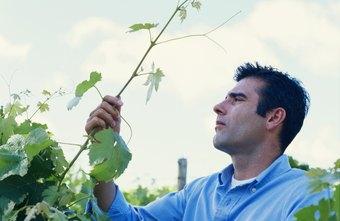 farming business plan doc