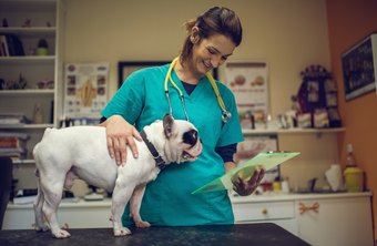 What Education or Training Do You Need to Become a Veterinarian?