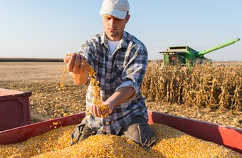 Farmers can see the benefits of their hard work through successful harvests.