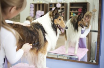 Dog Groomer Average Salary Requirements And Job Description