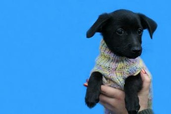 Make fashionable clothes for your dog from your old sweaters.