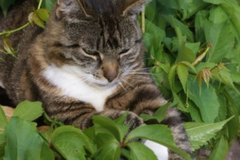 Your favorite plants might not be safe for your cat to eat.