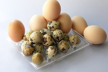 Are Eggs Healthy for Dogs?