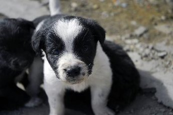 How Long Do New Puppies Need to Nurse?