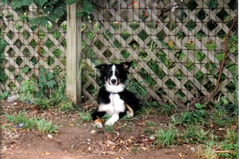 How to Teach a Dog Not to Jump the Fence