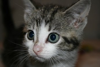 Kitten Worming Medicine