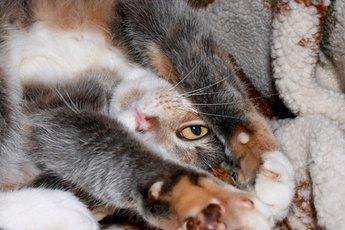 Vibramycin & Cats