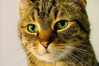 Why Do Cats Urinate on Your Clothes & Bed?