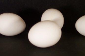 What Do Dog Flea Eggs Look Like?